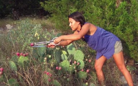 «Εύκολη» και κερδοφόρα η καλλιέργεια φραγκοσυκιάς
