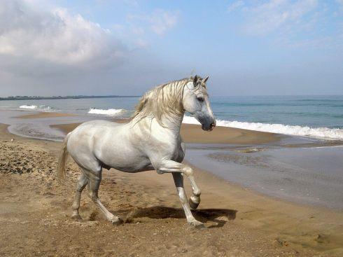 beautiful-horses-12