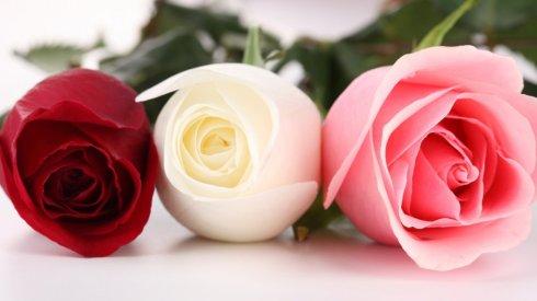 best_flowers_images1